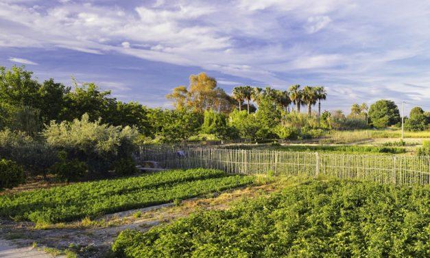 Descubre los senderos y rincones de la huerta de Murcia