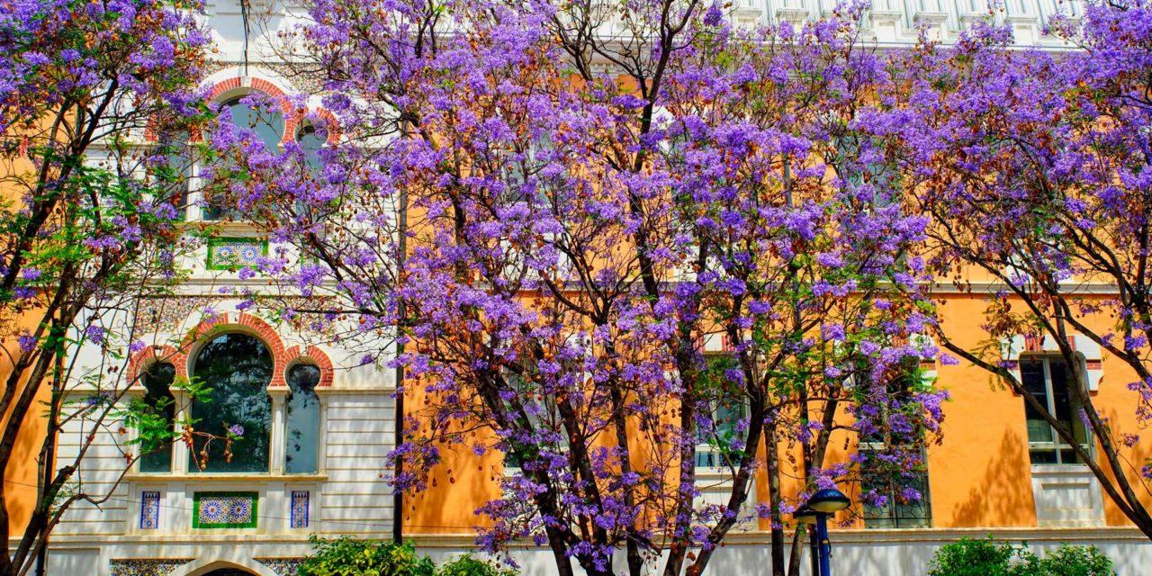Cinco museos llenos de conocimiento y diversión en Murcia