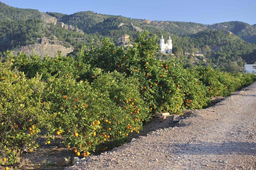 Nuevas rutas en bici por la huerta de Murcia